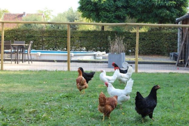 Dores vzw boerderij 7